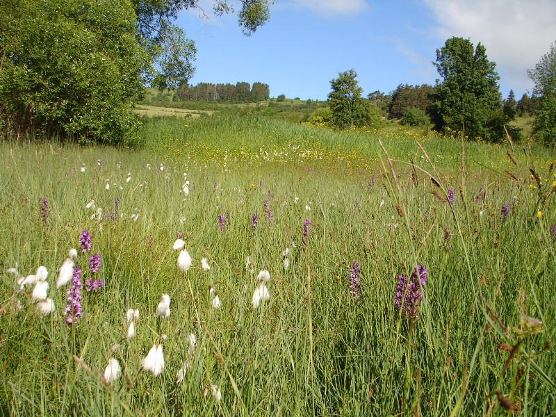 Kalkflachmoor (Foto: J. Gombert)