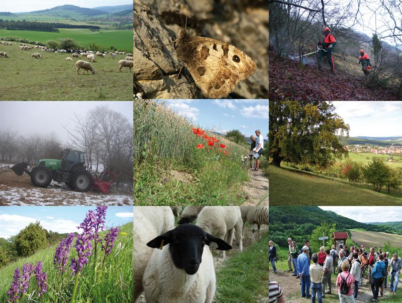 Collage aus Rhönimpressionen, mit Schafen, einer Hutebuche und der typischen Vegetation von Kalk-Magerrasen (Collage: J. Gombert)