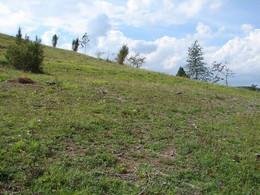 wiederhergestellter Kalkmagerrasen in der Wiesenthaler Schweiz