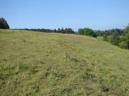 Eine der ersten während der Umsetzungsphase begonnenen Maßnahmen bestand in der Entfernung des dichten Schwarzkiefernaufwuchses am Hofberg. (Foto: LPV)