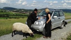 Die Beratung der Schäfer, vor Ort, ist ebenfalls eine wichtige Aufgabe des LPV Rhön. Frau Ludwig diskutiert auf der Fläche mit einem Schäfer. Ein handzahmes Schaf aus der Herde gesellte sich zum Gespräch aum Auto hinzu.