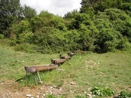 Diese Tränke am Südhang der Hohen Geba ist die einzige Stelle in diesem Bereich wo die Tiere mit Wasser versorgt werden können (Foto: P. Ludwig)