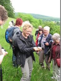 Frau Gombert zeigt den Exkursionsteilnehmern ein eingefangenes Zauneidechsenmännchen, welches man gut an der grünen Färbung erkennen kann.