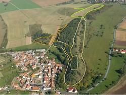 Die Schrägluftbildaufnahme zeigt den Lämmerberg und das Dorf Gerthausen vor Beginn der Pflegemaßnahmen. Die Magerrasen an den Flanken des Lämerbergs waren stark mit Kiefernsukzession bewachsen.