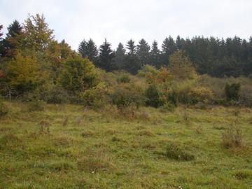 Bereich an der Lühr im Kerngebiet 6. In diesem Abschnitt soll ein Durchtrieb geschaffen werden. (Foto: P. Ludwig)