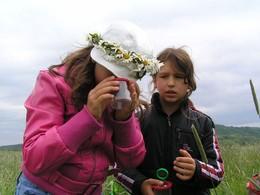 """... so wurde den Grundschülern aus Herpf bei Ihrem """"Rhönwandertag"""" die heimsche Wiesenfauna näher gebracht (Foto: LPV)"""