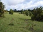 Nach der Gehölzentnahme präsentiert sich der Weinberg wieder mit weiten, offenen Flächen - für Wärme liebende Arten konnten so Lebensräume gesichert werden.