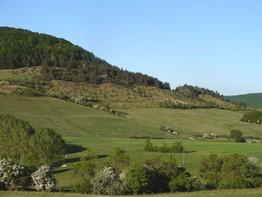 Die Wacholderheide am Südhang der Kleinen Geba weist starken Wacholderaufwuchs und Schlehensukzession auf.