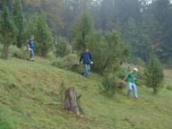 Schüler des Rhöngymnasiums räumen Wacholder von der Pflegefläche