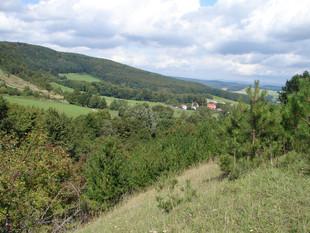 Auch bei Hümpfershausen war eine wertvolle Fläche im Laufe der letzten Jahre dem Schwarzkiefernaufwuchs zum Opfer gefallen (Foto: P. Ludwig)