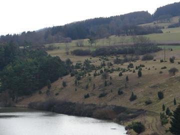 Dieselbe Fläche nach den Pfelgemaßnahmen, neben den Wacholdern wuden auch hier junge Kiefern entfernt (Foto: P. Ludwig)