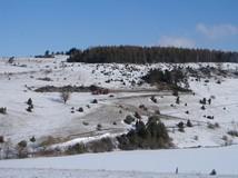 Wir befinden uns immer noch am Grimmelbachspeicher, diesmal am Südhang der Hardt. Bereits im Winter 2008/09 wurde hier mit der Wiederherstellung der Kalkmagerrasen begonnen und dabei zahlreiche Wacholder entnommen.In der darauffolgenden Saison konnten di
