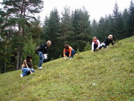Schülerinnen des Rhöngymnasiums beim Zupfen von Fichtenjungwuchs