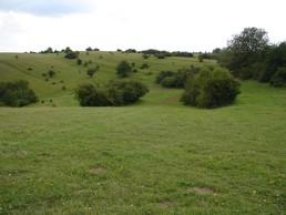 Das Bild zeigt die Fläche nach Entnahme der Schlehensukzession. Die Hutebuche ist nun wieder freistehend und einige Gebüschgruppen geben dem Bereich Struktur.