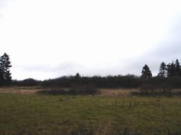 Entbuschung auf artenreichem Extensivgrünland auf der Lühr (KG 6)