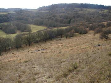 Dieselbe Fläche nach der Entbuschung. Am unteren Rand der Fläche wurde ein alter Streuobstbestand ebenfalls wieder freigestellt. (Foto: J. Gombert)