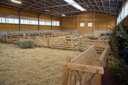 """einige Schafe durften zur Eröffnungsfeier im neuen Stall """"Probewohnen"""" (Foto: P. Ludwig)"""