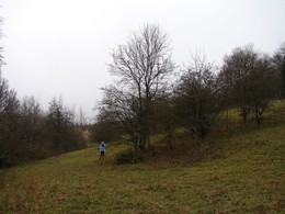 Im Beertal, im Kerngbiet 3, wurden in der  Wintersaison 2013/14 ebenfalls Gehölze entnommen. Hier handelte es sich vor allem um Schlehenverbuschung und zu dichte Laubgehölzbestände (u.a. Feldahorn)
