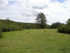 Sommeraspekt der Fläche im Anschluss an die 3. Nachpflege, nun auch ohne Waldkiefern, die den Halbtrockenrasen beschatteten