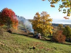 Ein Traktor zieht einen gefällten Baum hinter sich her. Auf diese Weise wurden viele der Bäume, die im Rahmen der Evaluierung entnommen wurden von der Fläche entfernt. Das Bild zeigt außerdem Ahornbäume, die erhalten bleiben,  in wunderbarer Rotfärb