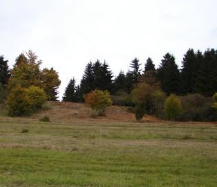 Ansicht des Bereichs nach der Schaffung des Durchtriebs. (Foto: P. Ludwig)