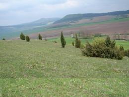 Kalkmagerasen vor der Erstpflege, dicht mit Wacholdern und jungen Kiefern bewachsen