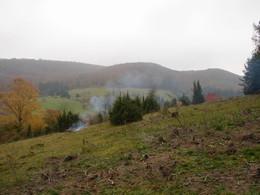 Auflichtung von zu dichten Wacholderbeständen an der Buchholzdrift bei Wiesenthal (KG 2)