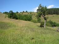 Dieses Bild zeigt die Fläche nach der Entfernung des Hartriegels, solitäre Obstgehölze und Totholz wurden auf der Fläche belassen.