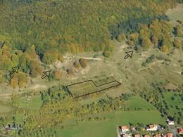 Am Kolben bei Fischbach (KG3) wurde zwischen den Hutebuchen Kiefernanflug entfernt sowie einzelne Terassen wiederhergestellt (Foto: D. Stremke, 2006)