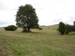 2009 wurde eine Wacholderheide auf artenreiche, mesophilen Extensivgrünland wiederhergestellt, indem zahlreiche Solitärfichten entfernt und Verbuschungen zurückgedrängt wurden. (Foto: LPV)