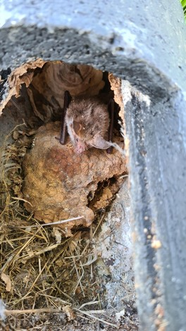 WG mal anders - Vögel, Hornissen und Bechsteinfledermäuse nutzen diesen Kasten