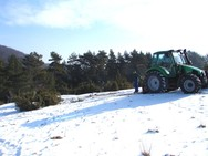 An der Grimmelbachleite wurden im Winter 2009/10 weitere Pflegemaßnahmen umgesetzt - hier wurde Wacholder mittels Seilwinde, die an einem Traktor befestigt ist, aus dem Boden gezogen.