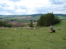 Vor der hügeligen Kulisse der Rhön zieht der Kaltennordheimer Schäfer mit seinen zwei Hunden und mit seiner Herde über die Hutungen der Hardt. In der Herde werden frisch geborene Lämmer mitgeführt.