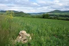 Im Mai 2014 konnte ein Pärchen Steinschmätzer am Acker beobachtet werden, für sie wurden randlich mehrere Steinhaufen errichtet.