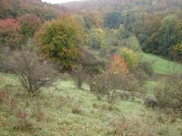 Im Herbst 2010 war die Fläche noch überwiegend mit Sträuchern und eschenjungbäumen zugewachsen.