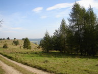 auf dem Hofberg bei Roßdorf wuchsen zahlreiche Kiefern und Lärchen