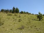 Das Bild zeigt die steile, vollkommen verbuschte Ziegenfläche vor Beginn der Pflegemaßnahmen.
