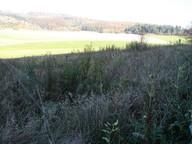 Das Bild zeigt ein verbrachtes Kalkflachmoor am Nordhang der Hardt bei Kaltennnordheim vor Beginn der 3-jährigen Aushagerungsmahd