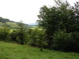 Der Durchgang von der Buchholztrift hin zur Neubergshut war stark durch Laubgehölze eingeengt.