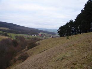 Die selbe Fläche bei Hümpfershausen nach der vollständigen Entfernung der Schwarzkiefern in Handarbeit (Foto: J. Gombert)