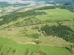 Den Boden des lichten Kiefernwaldes prägten auch 2009 noch Vertreter der Kalkmagerrasen, durch die Gehölzentfernungen sollen die Flächen wiederhergestellt und zukünftig mit Schafen beweidet werden (Foto: LPV).