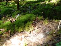 besonders schön ausgeprägte Kalk- tuffquelle bei Fischbach im Kerngebiet 3 (Foto: J. Gombert)