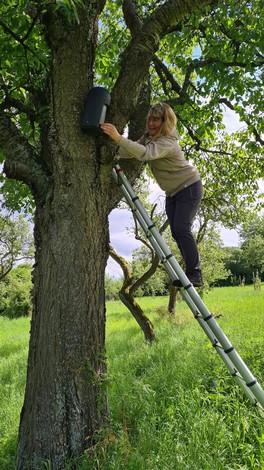 Projektnachsorge - die_Fledermaus- und Wendehalskästen werden weiterhin einmal im Jahr kontrolliert