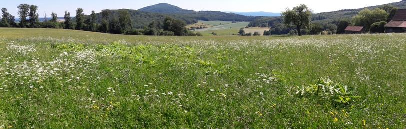 Panoramaaufnahme eines Neubestandes in der Gemarkung Lenders